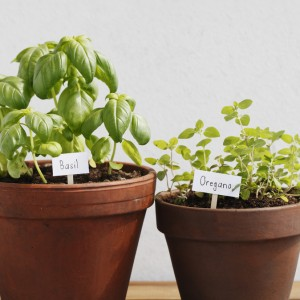 Basil and oregano